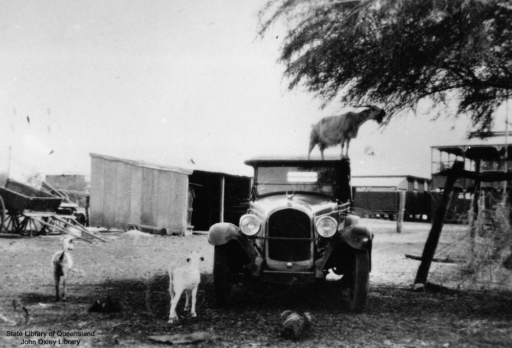 goat_standing_on_the_roof_of_a_car_in_cloncurry2c_queensland2c_1934_281713112132929